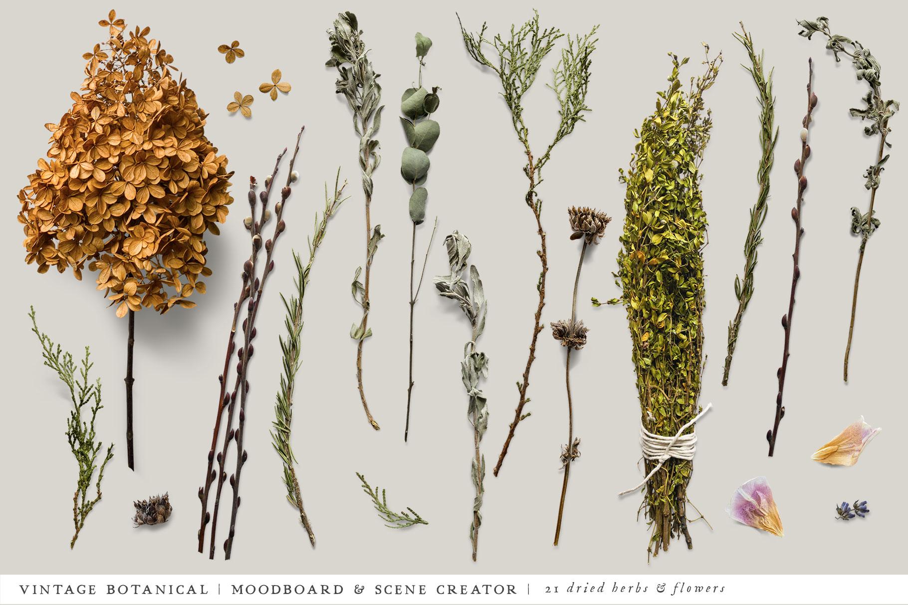 Botanical Moodboard Scene Creator example image 7