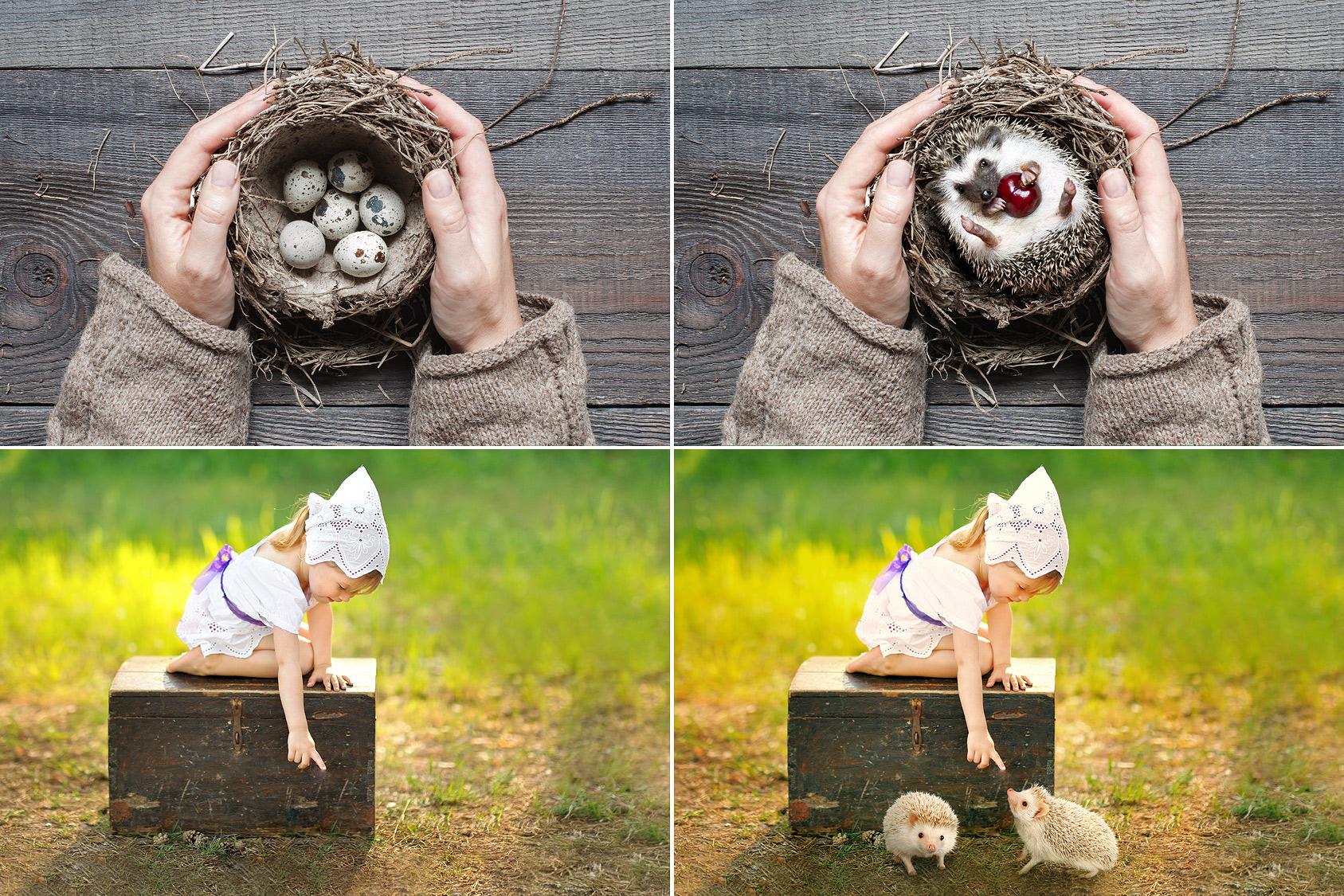 15 Hedgehog Photo Overlays example image 3