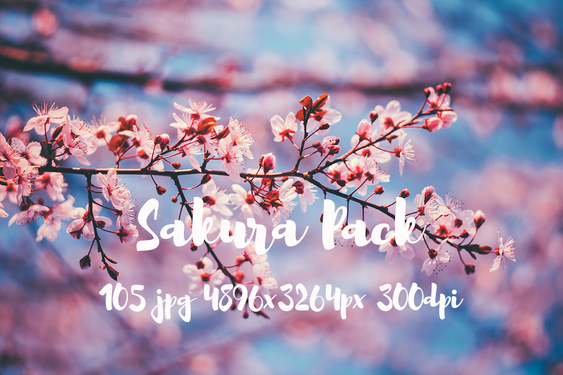 sakura photo pack example image 22