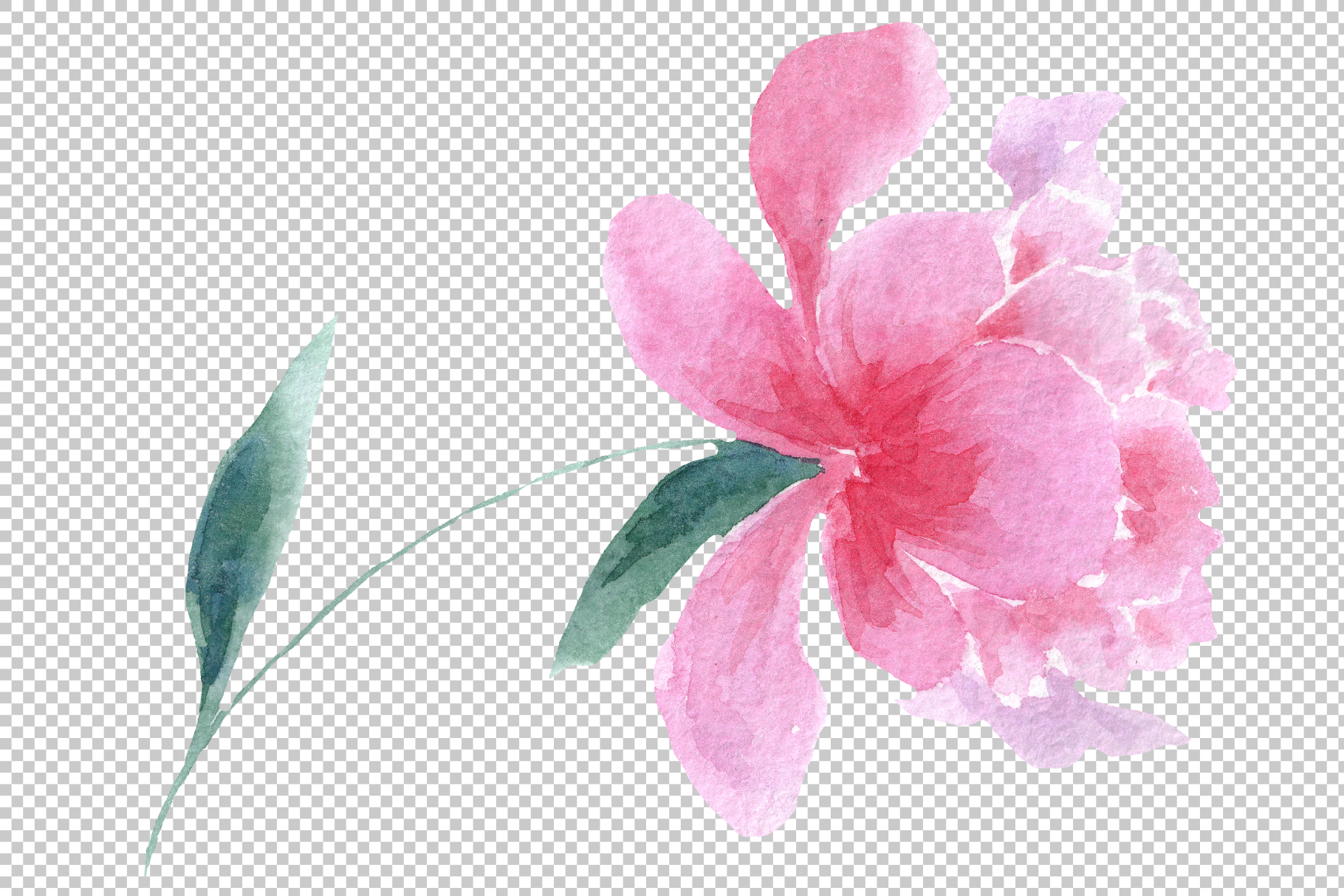 Delicate colorful peony PNG watercolor set example image 14