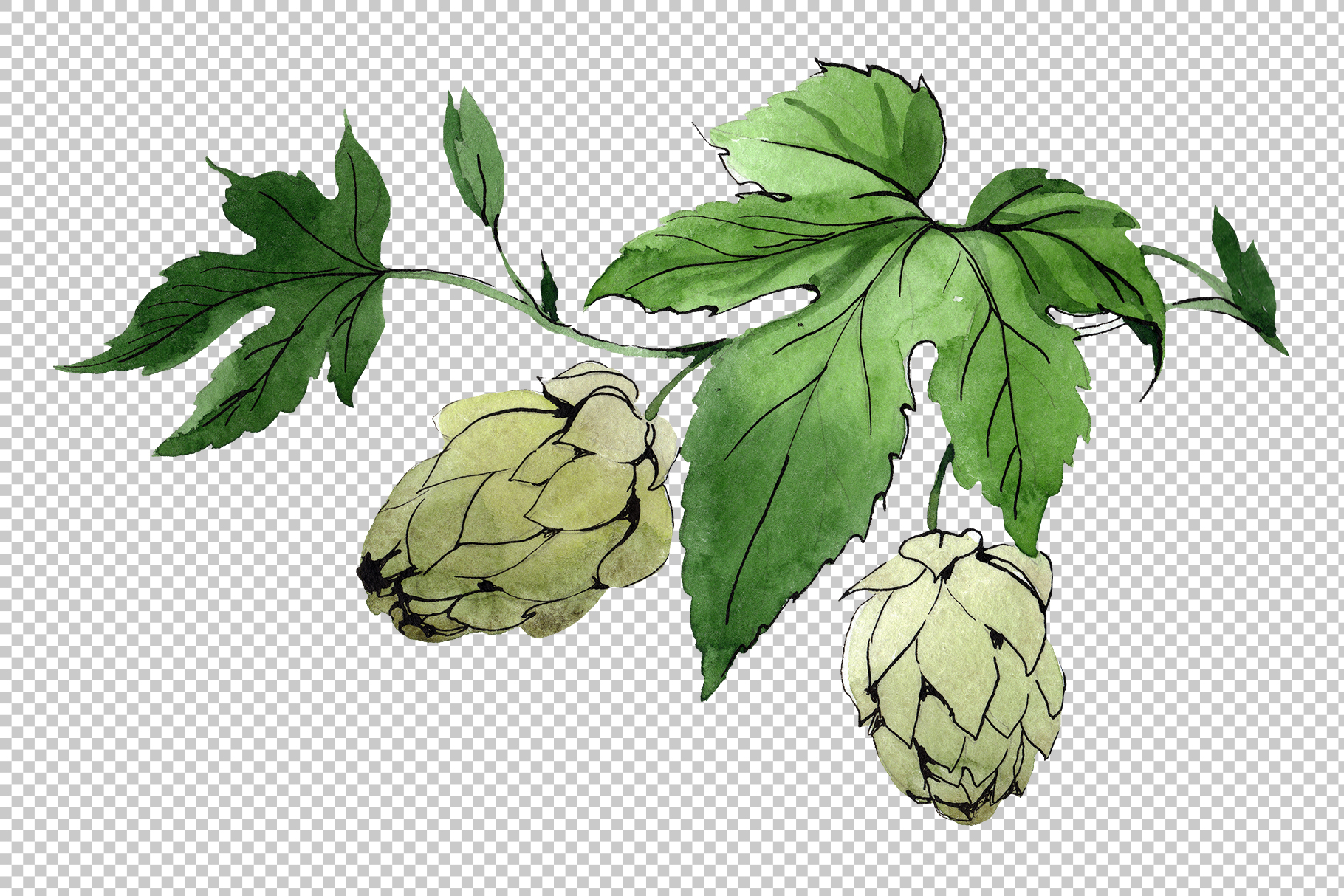 Green watercolor hops png set example image 5