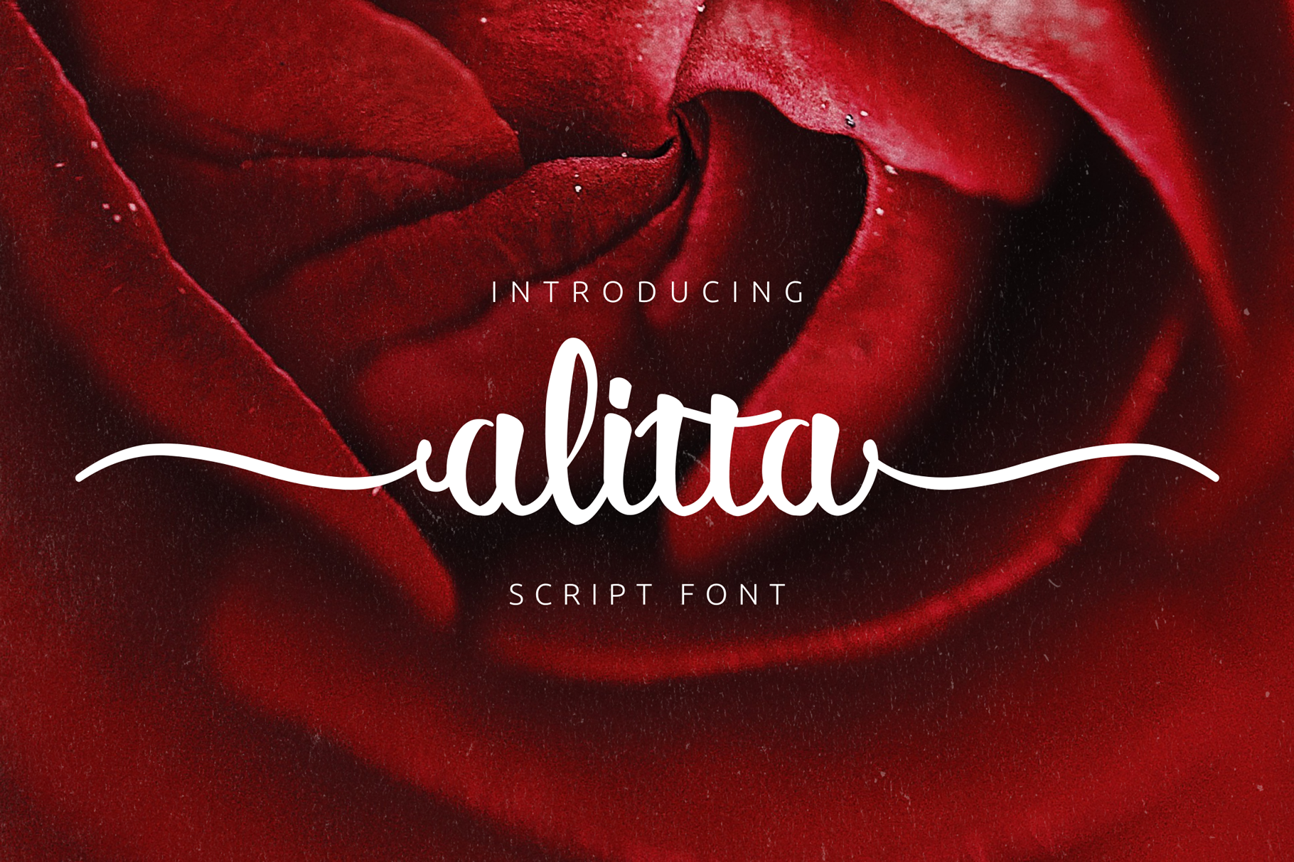 Alitta example image 5