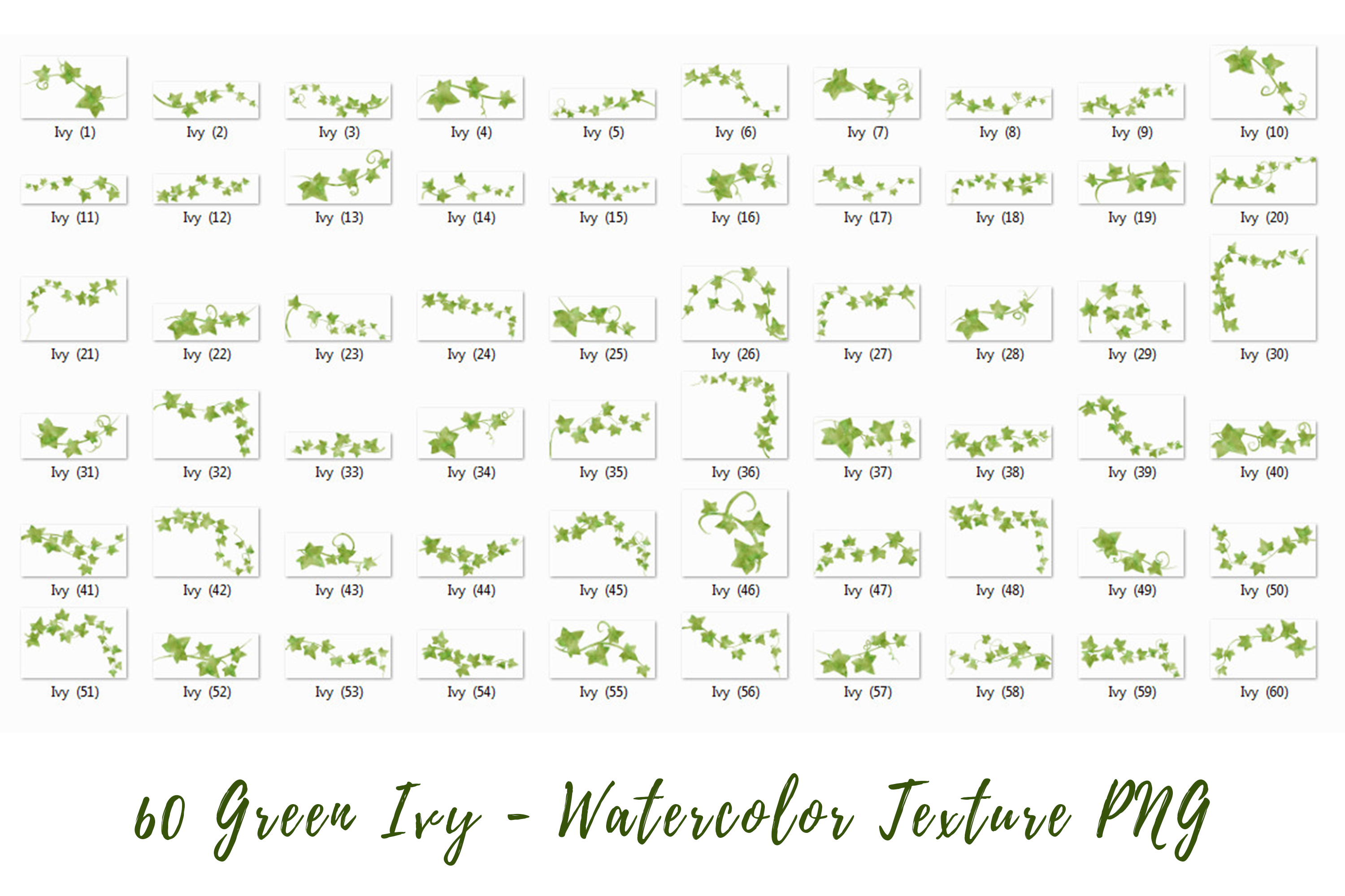 60 Green Ivy - Watercolor Texture|PNG example image 6