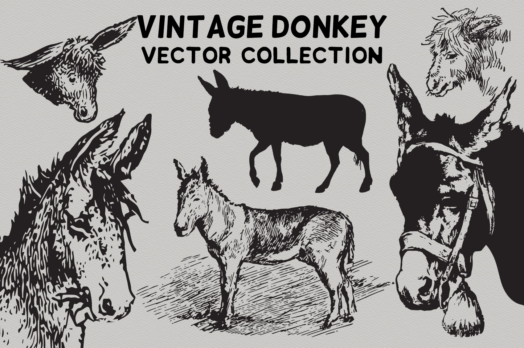 Vintage Donkeys Vector Collection example image 5