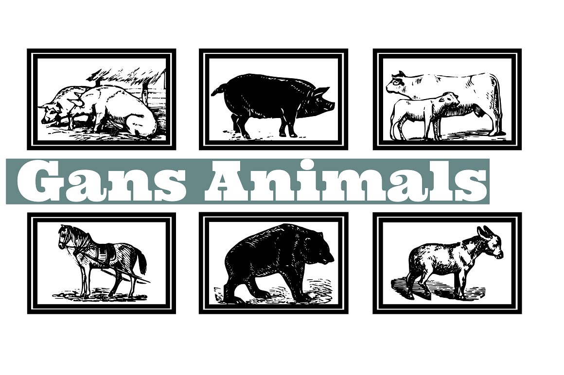 Gans Animals example image 1