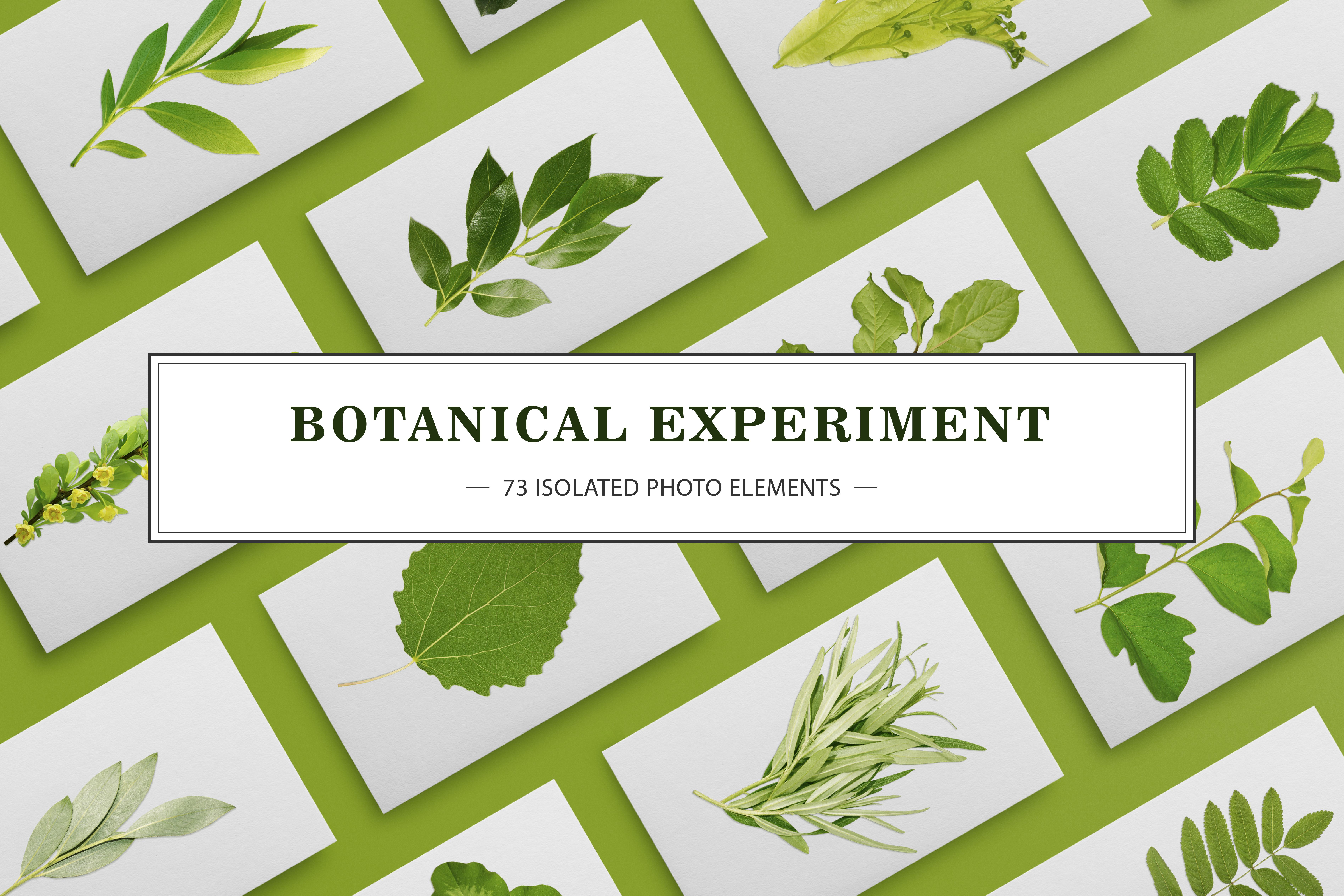 BOTANICAL EXPERIMENT example image 1
