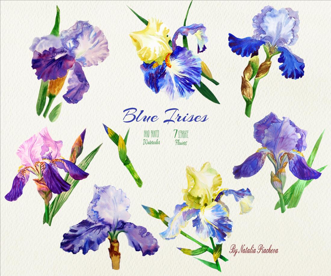 Blue Irises. Watercolor Clip Art example image 2