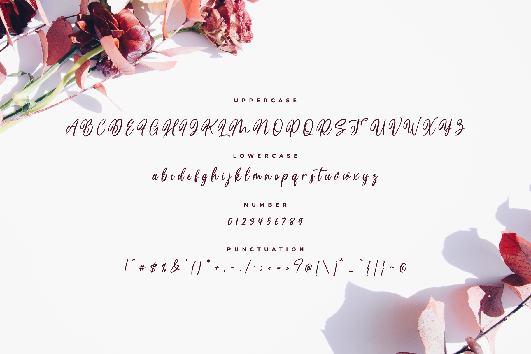 Medalion Calligraphy Font example image 7