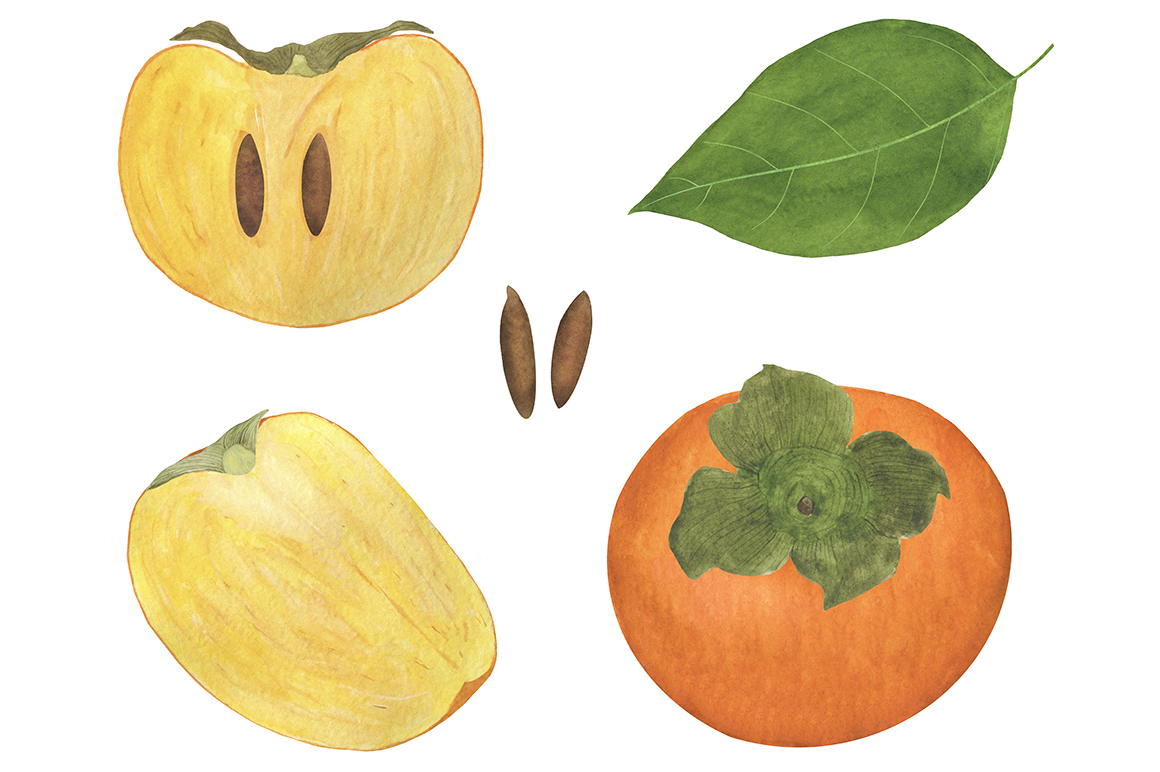 Set of persimmon watercolor illustrations. example image 3