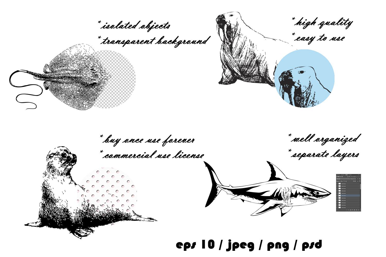 Ocean inhabitants set. Hand drawn illustration collection. example image 6