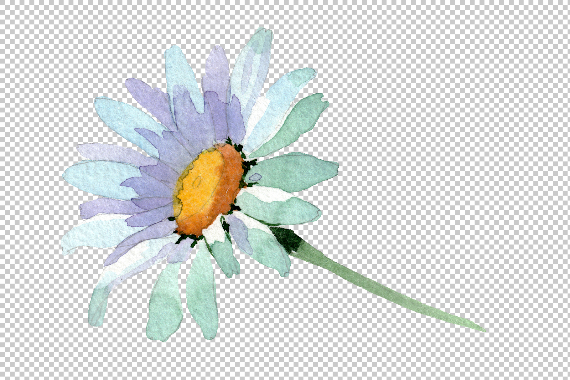 Big white chamomile Watercolor png example image 3