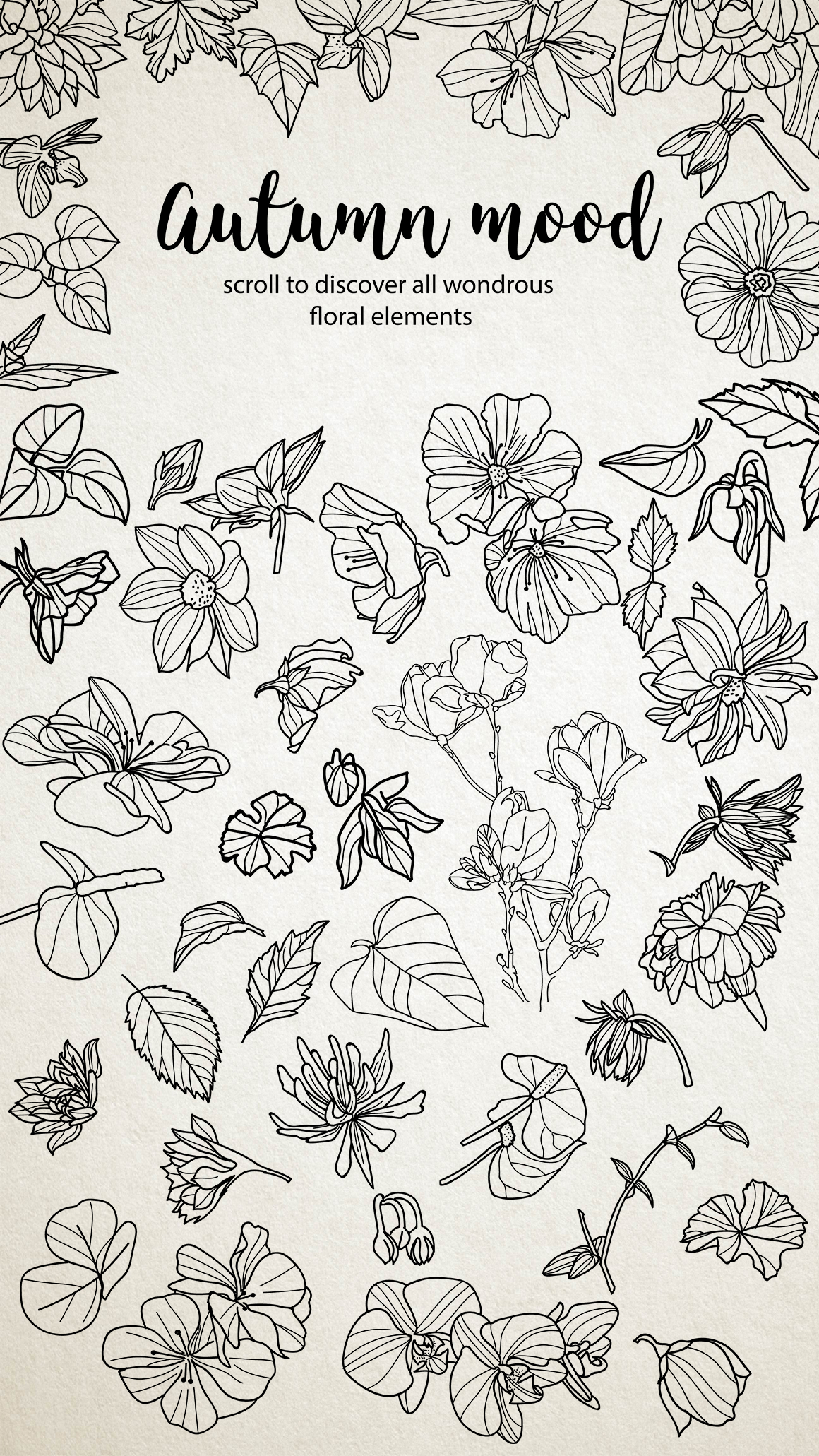 50 hand drawn floral elements example image 2