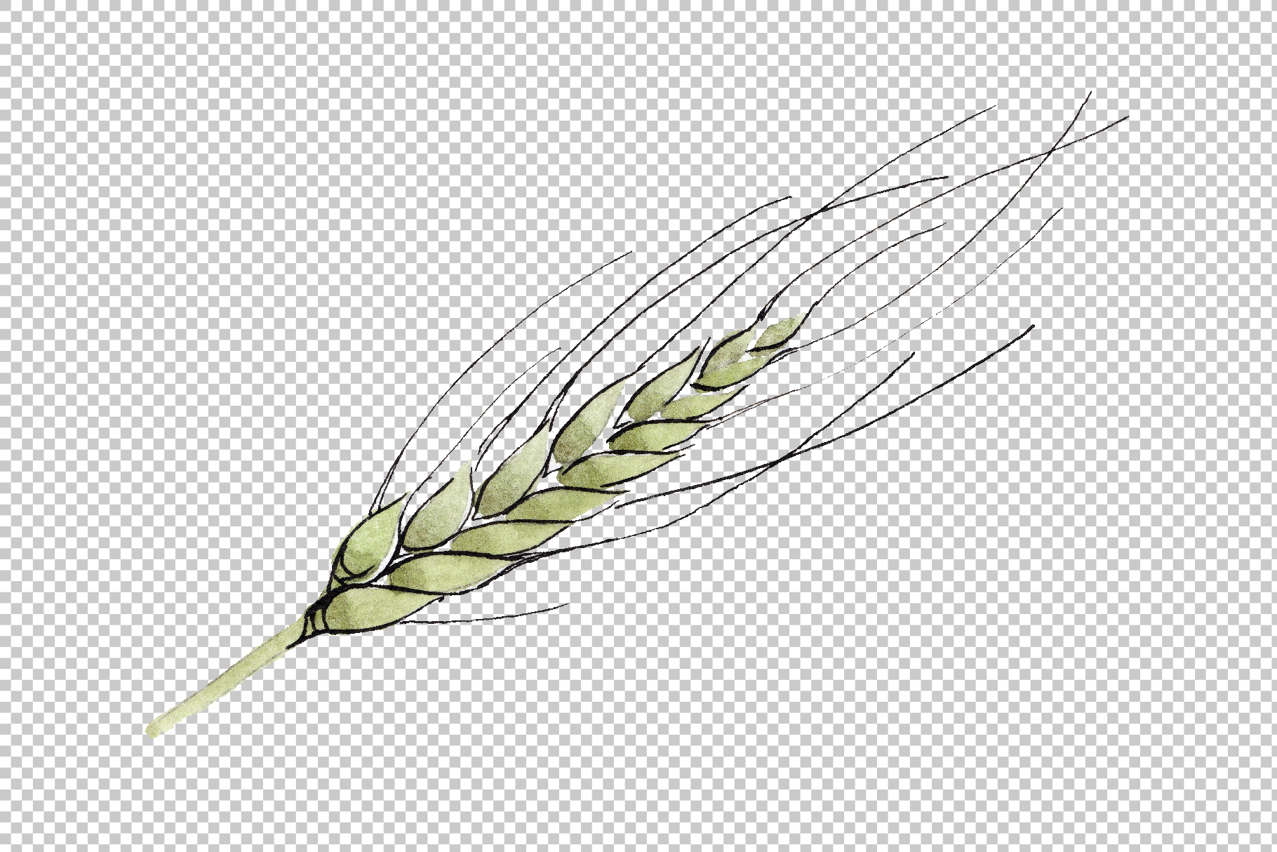Spike of wheat Watercolor png example image 4