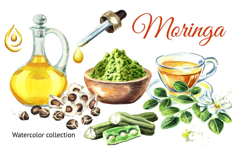 Moringa. Watercolor collection example image 1