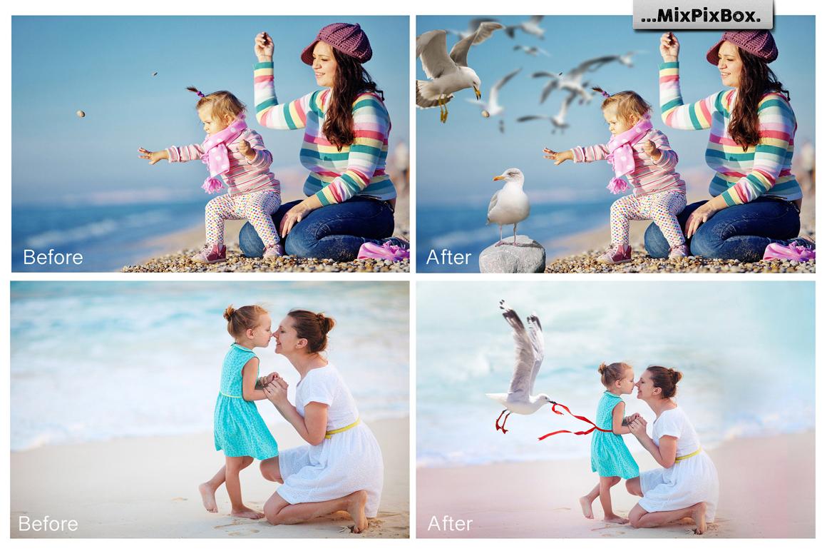 Seagulls Photo Overlays example image 2