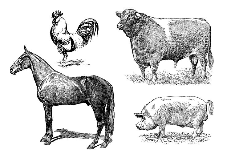 Vintage Bundle PNG, EPS, SVG Vector Farm Animals example image 2