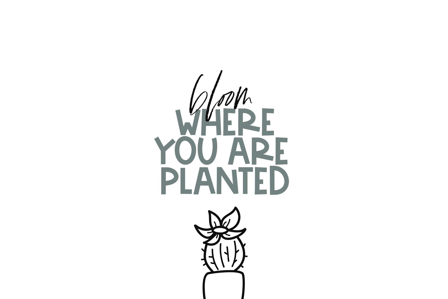 Fancactus - A Cactus & Succulent Doodle Font example image 9