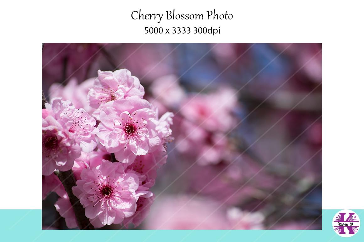 Cherry Blossom Photo example image 1