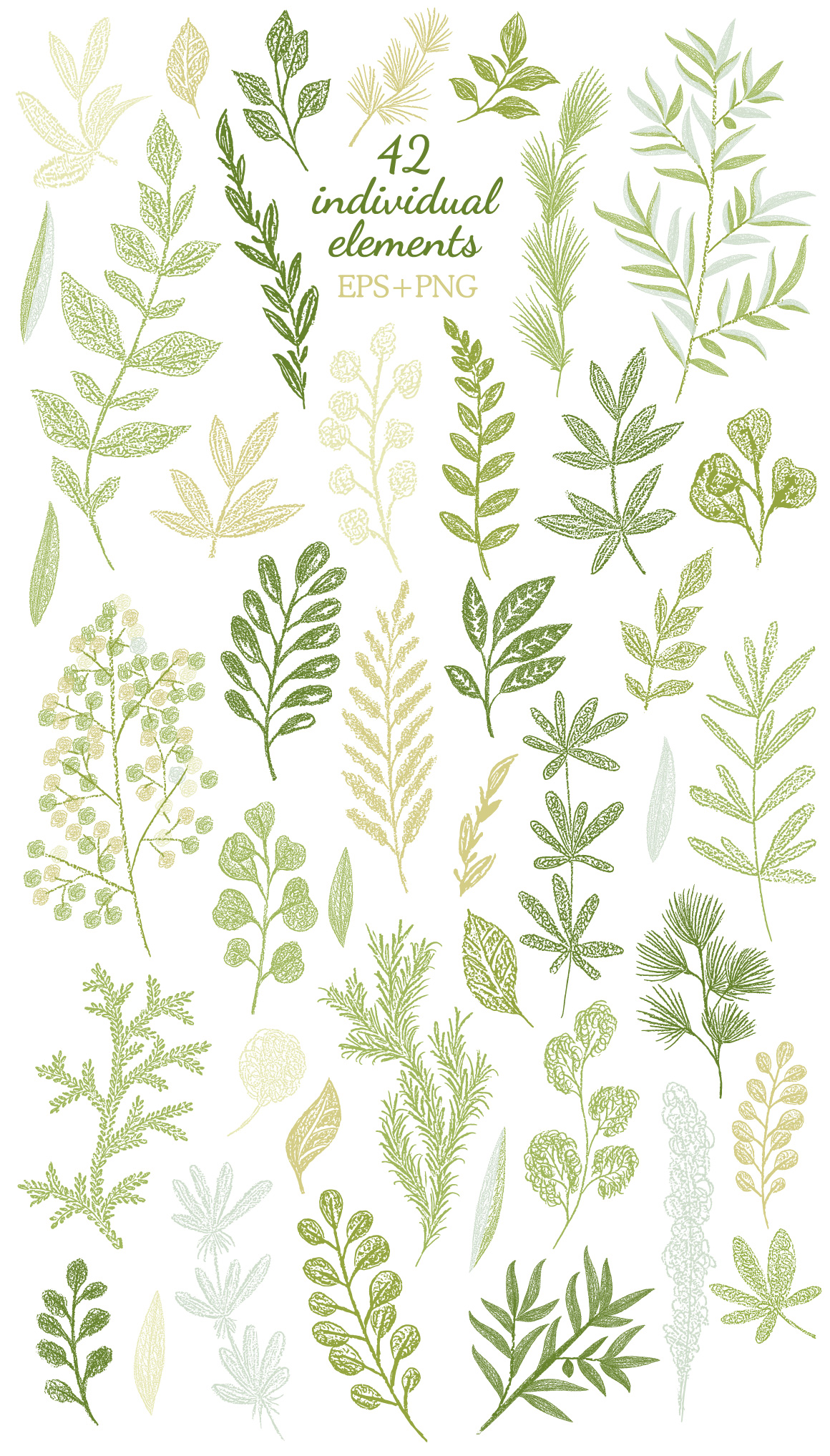 Hand drawn Leaves Branches & Herbs Fresh Doodle collection example image 8