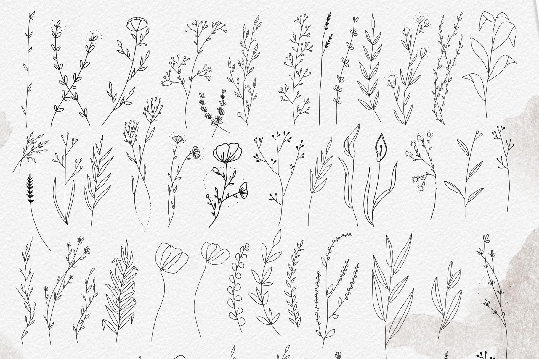Line art botanical illustrations example image 6