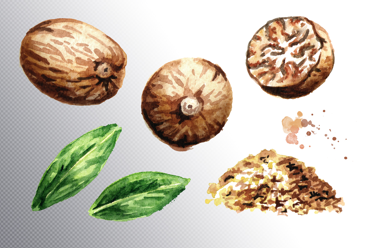 Nutmeg. Watercolor collection example image 3