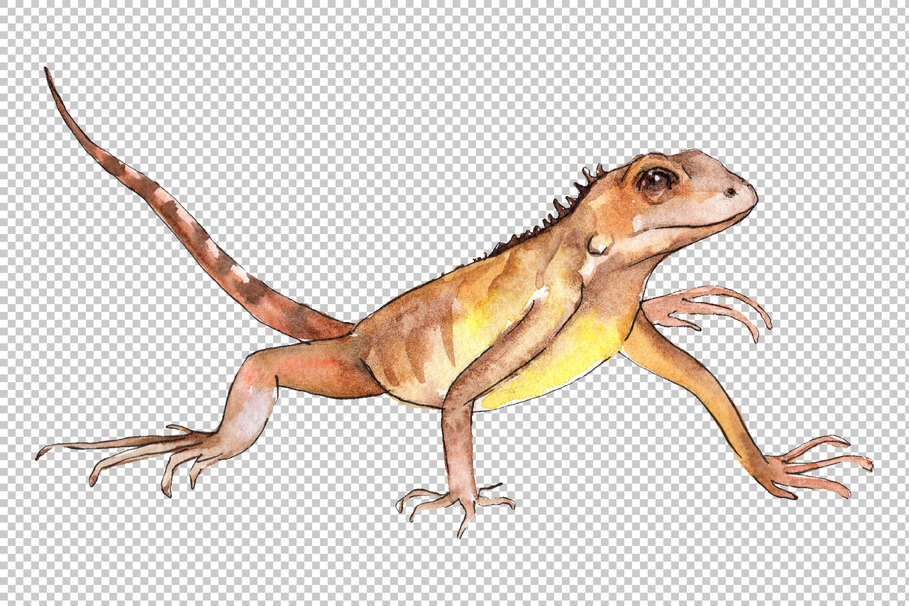 Iguana-1 Watercolor png example image 3