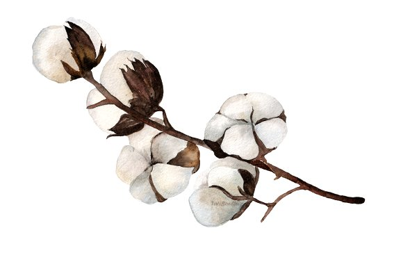 Watercolor Cotton Clip Art - Print example image 3