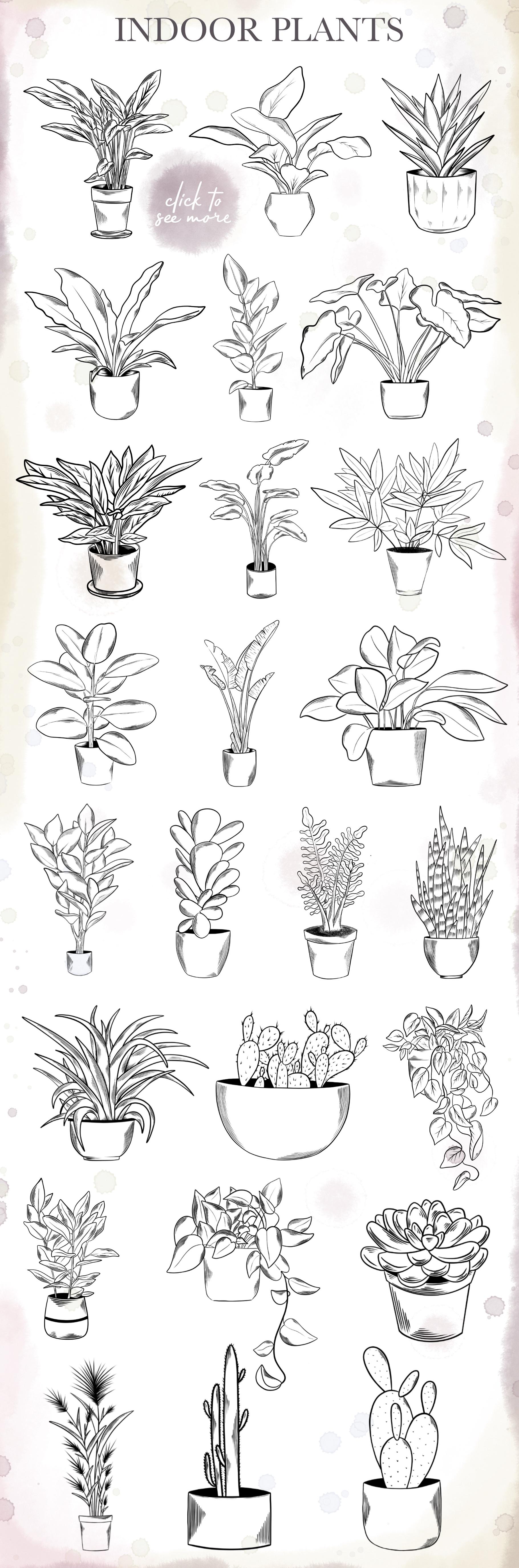 Indoor Plants example image 2