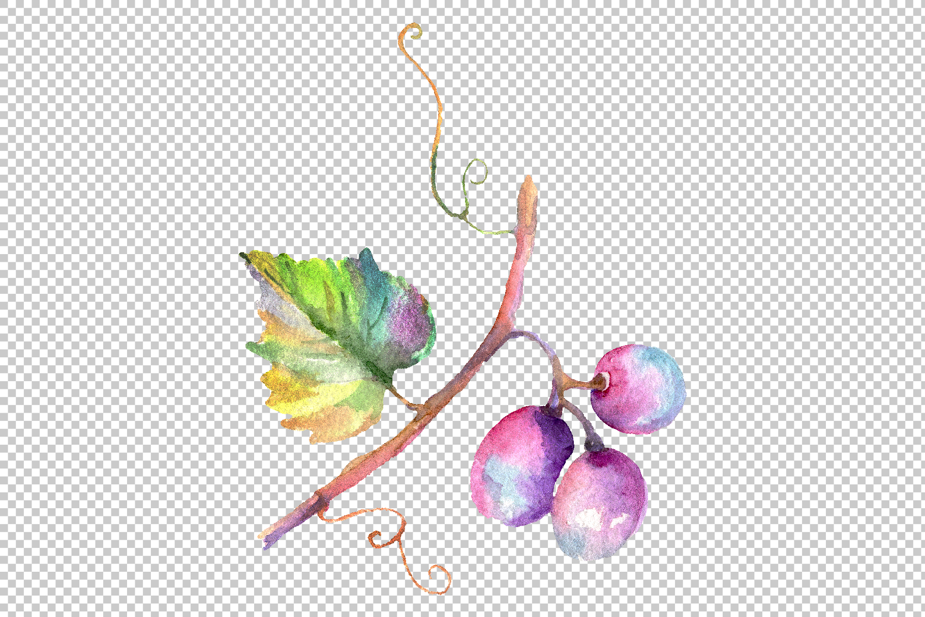 Blue grapes Watercolor png example image 10