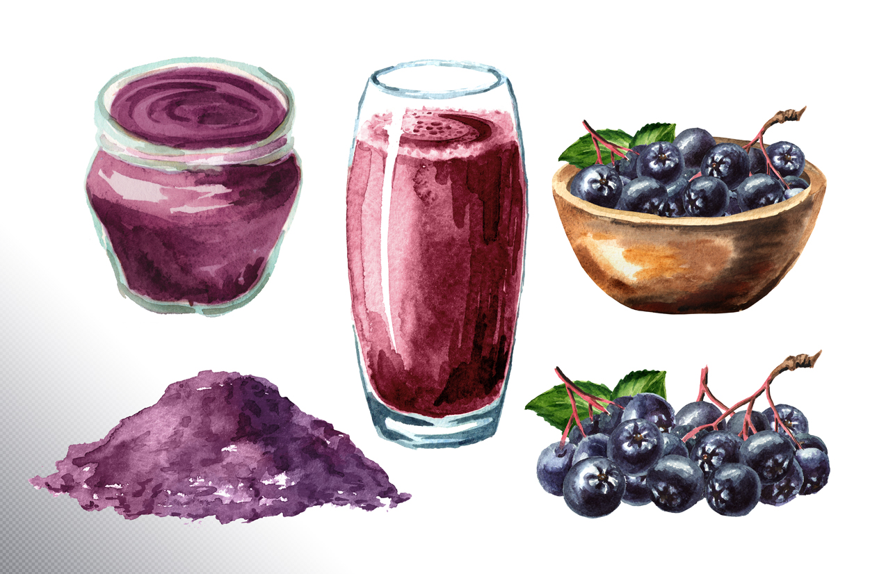 Aronia. Watercolor collection example image 10