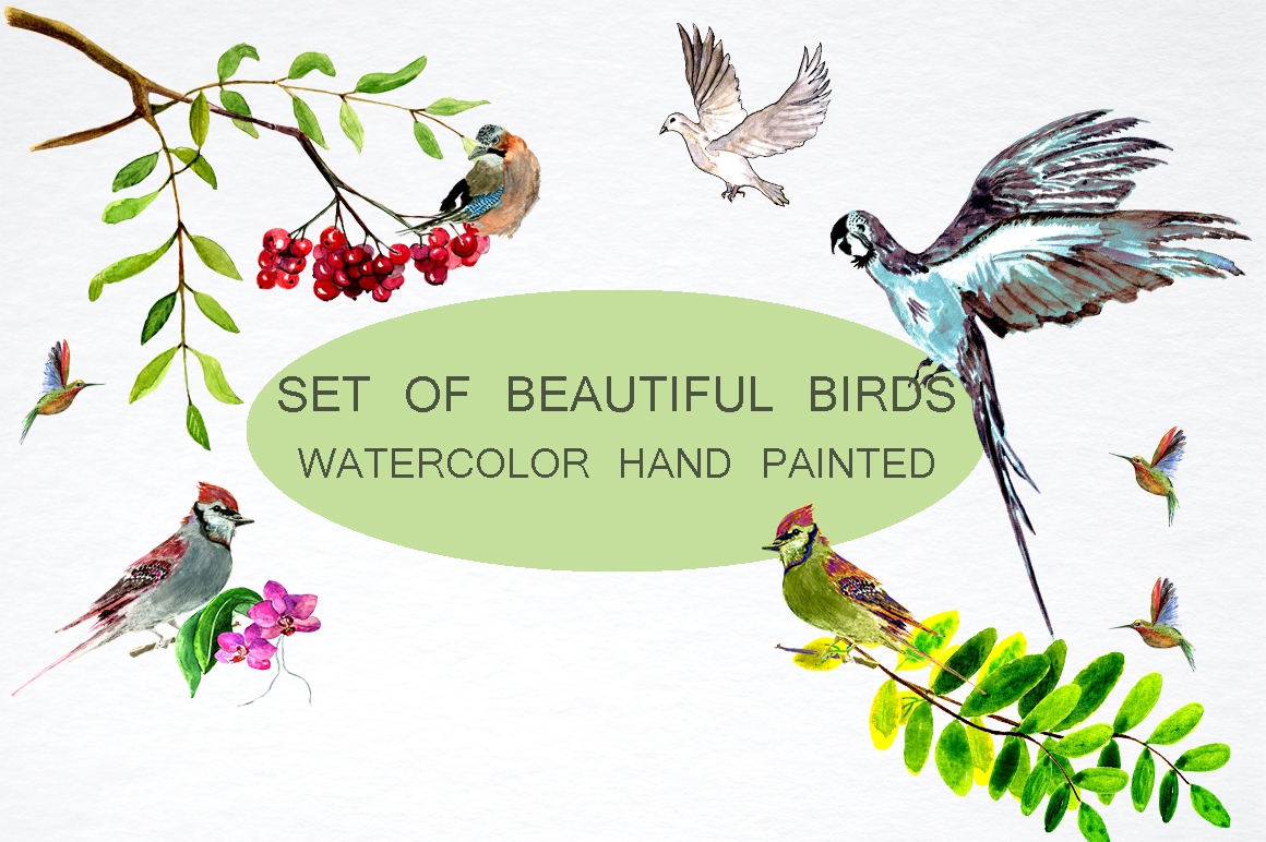 Set of beautiful birds example image 2