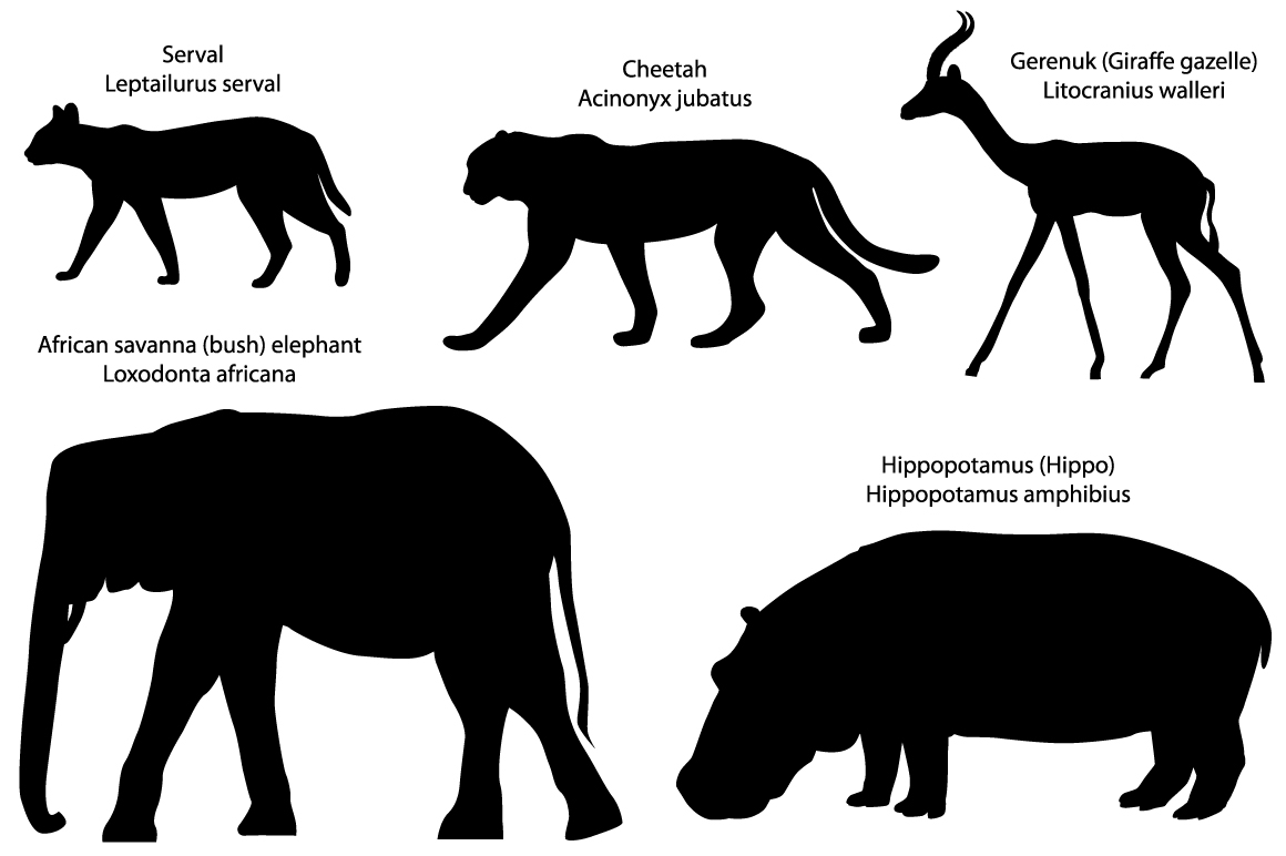 Silhouettes of animals of Africa: serval, cheetah, gerenuk, hippo, elephant example image 1