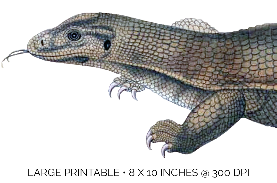 Reptile - Vintage Yellow Monitor example image 5