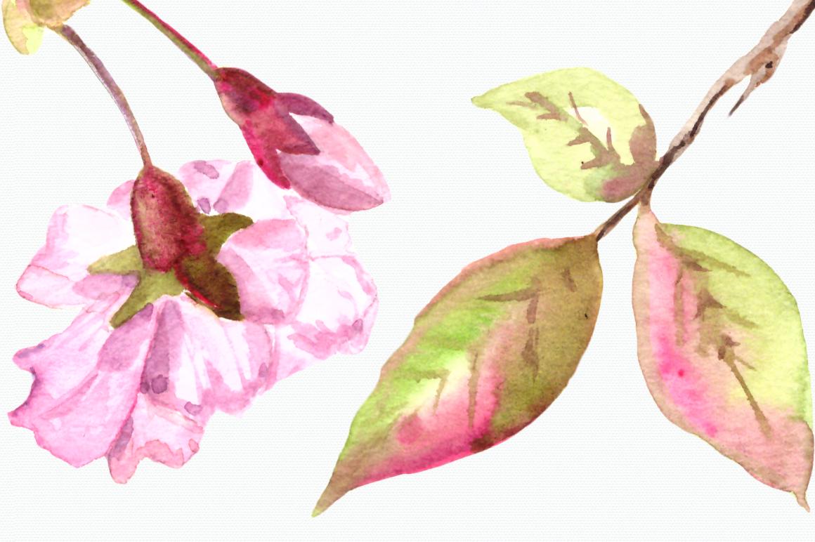 Watercolor Sakura Clip Art Set example image 4