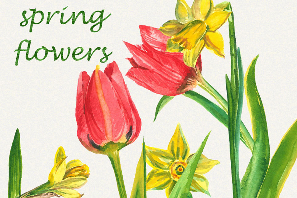 Spring flower clipart, Tulip clipart, narcissus clipart example image 3