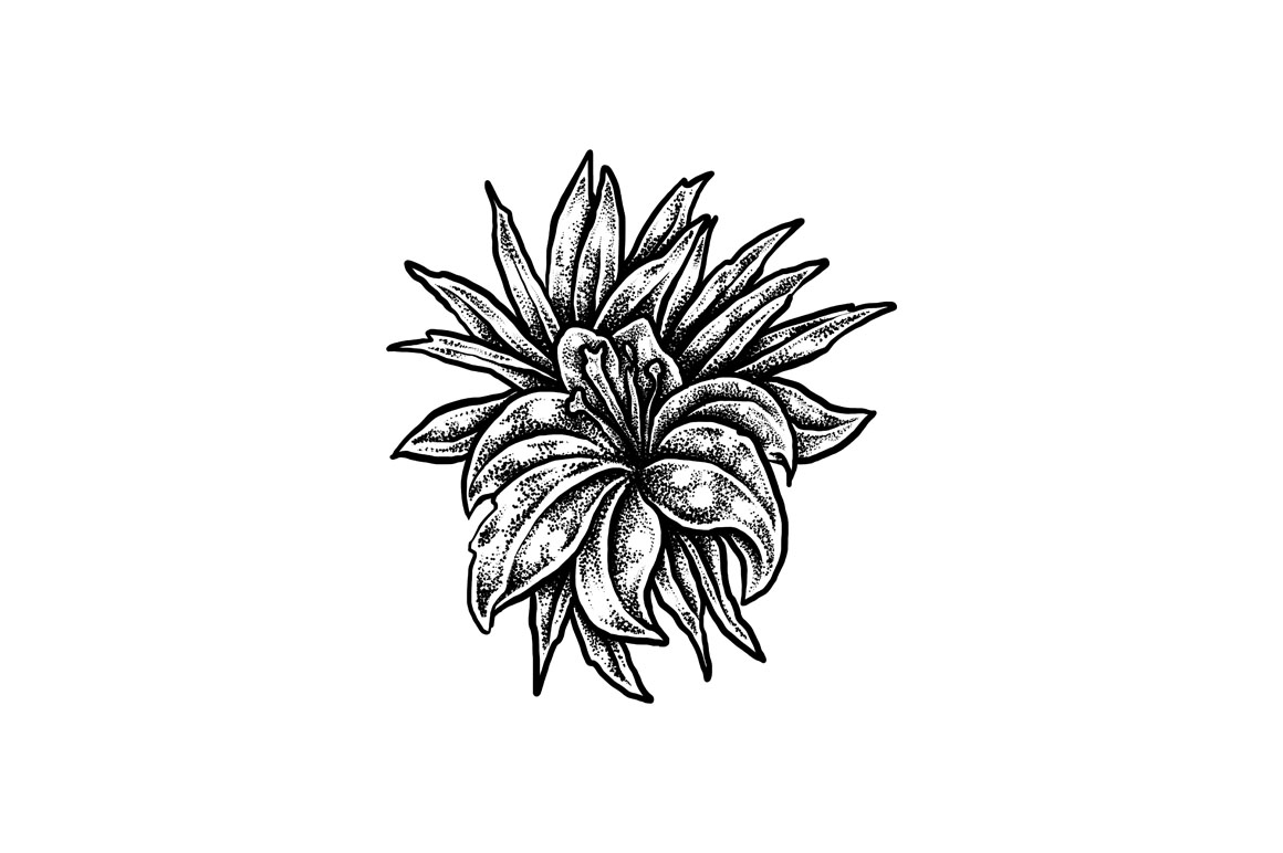Blackwork flower Collection example image 2