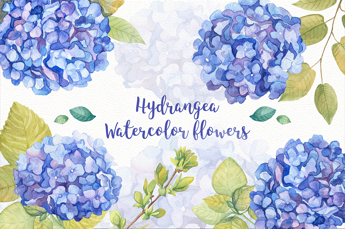 Hydrangea Watercolor Flowers example image 2