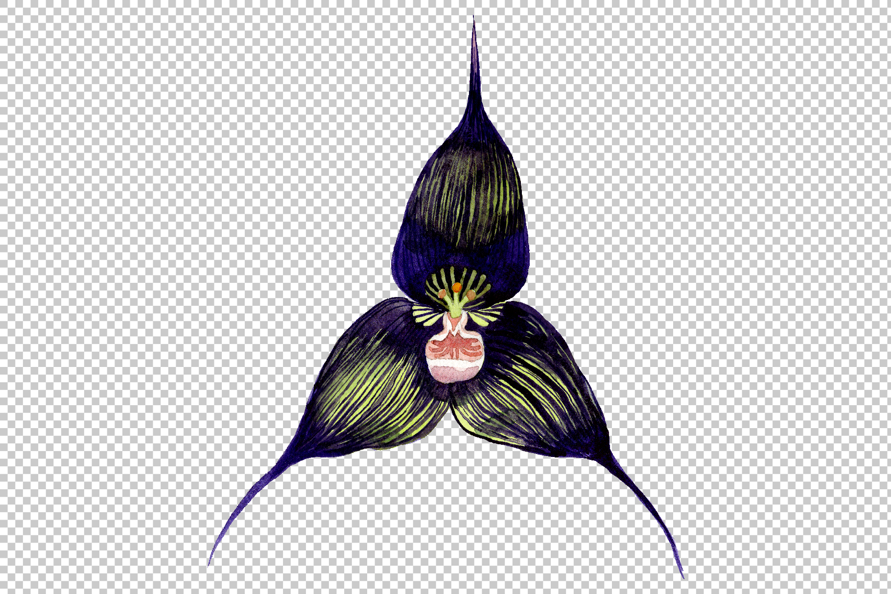 Orchid black Watercolor png example image 13