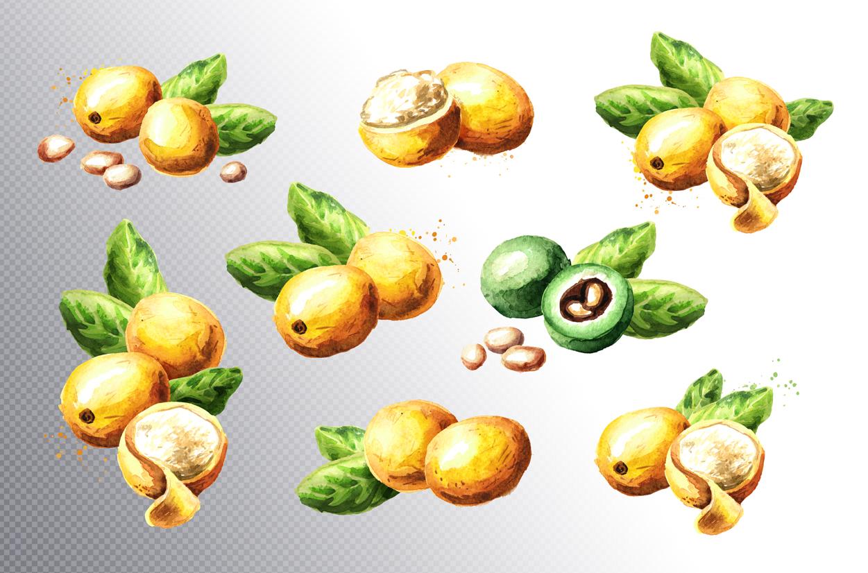 Marula example image 2