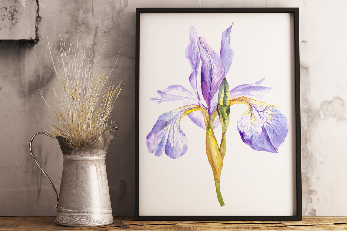 Watercolor Purple Iris Clip Art & Print example image 1