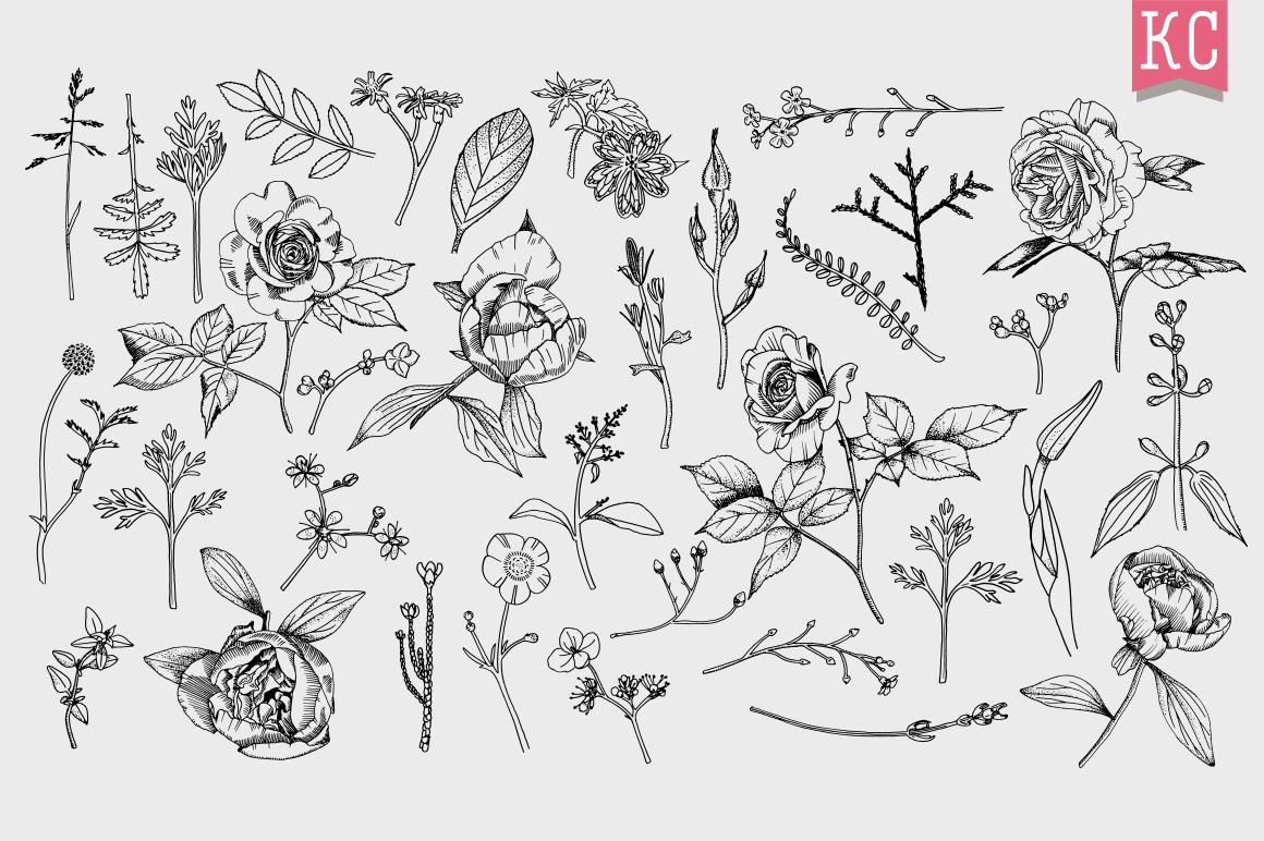 Vector Botanical Bundle Illustrations example image 7