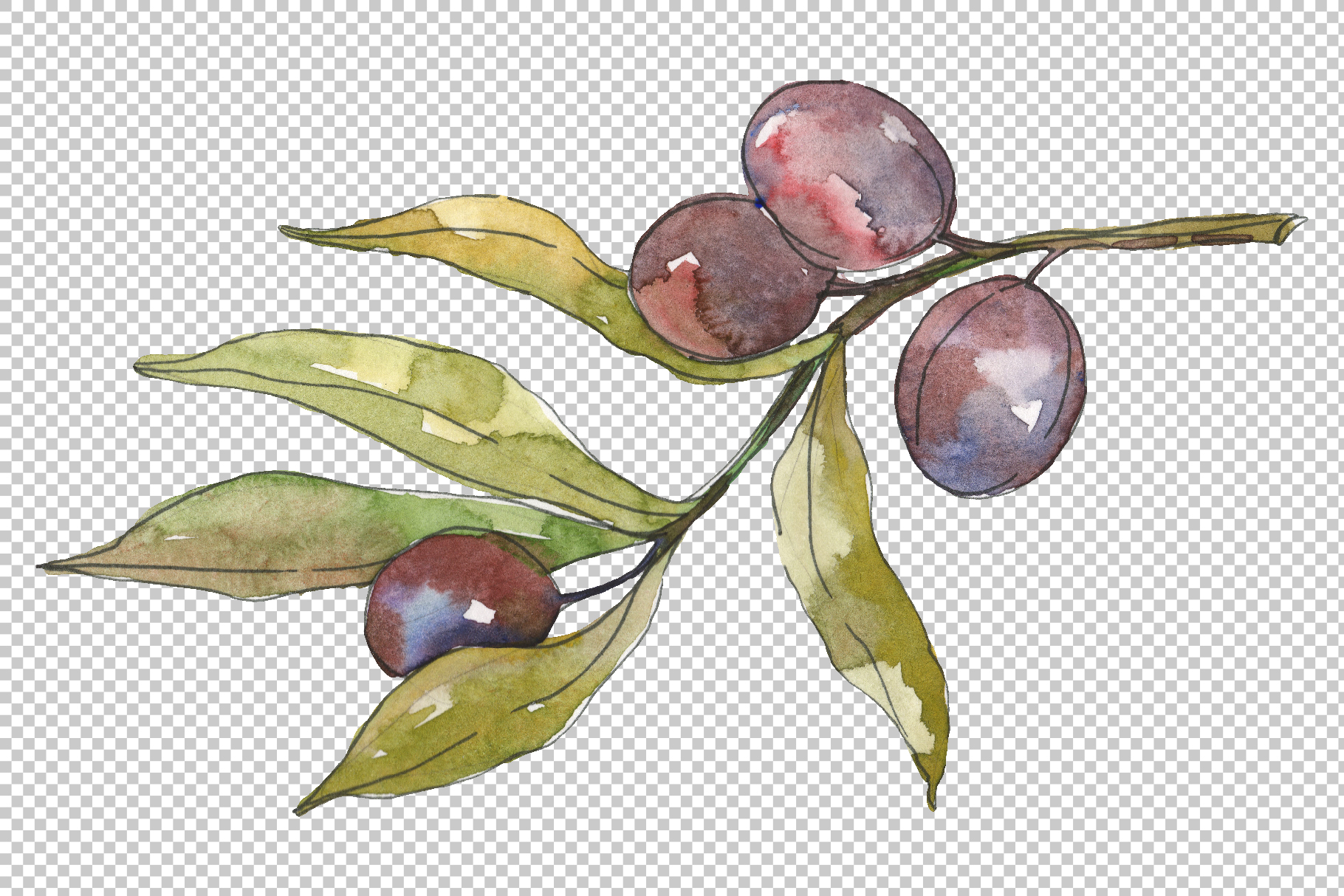 Olives Watercolor png example image 6