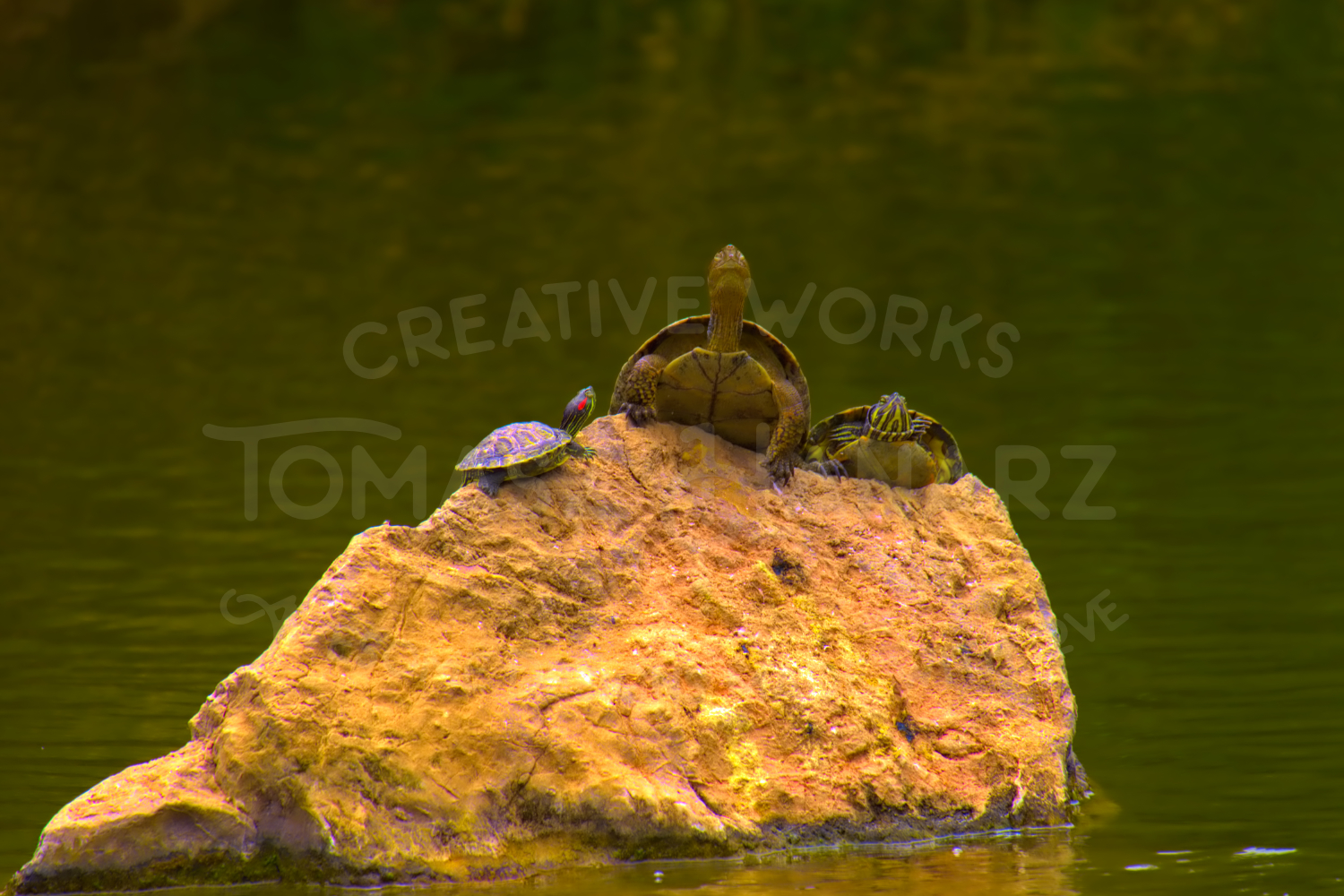 Turtle family example image 1