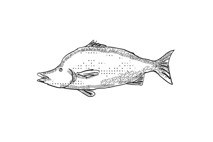 Giant Boarfish New Zealand Fish Cartoon Retro Drawing example image 1