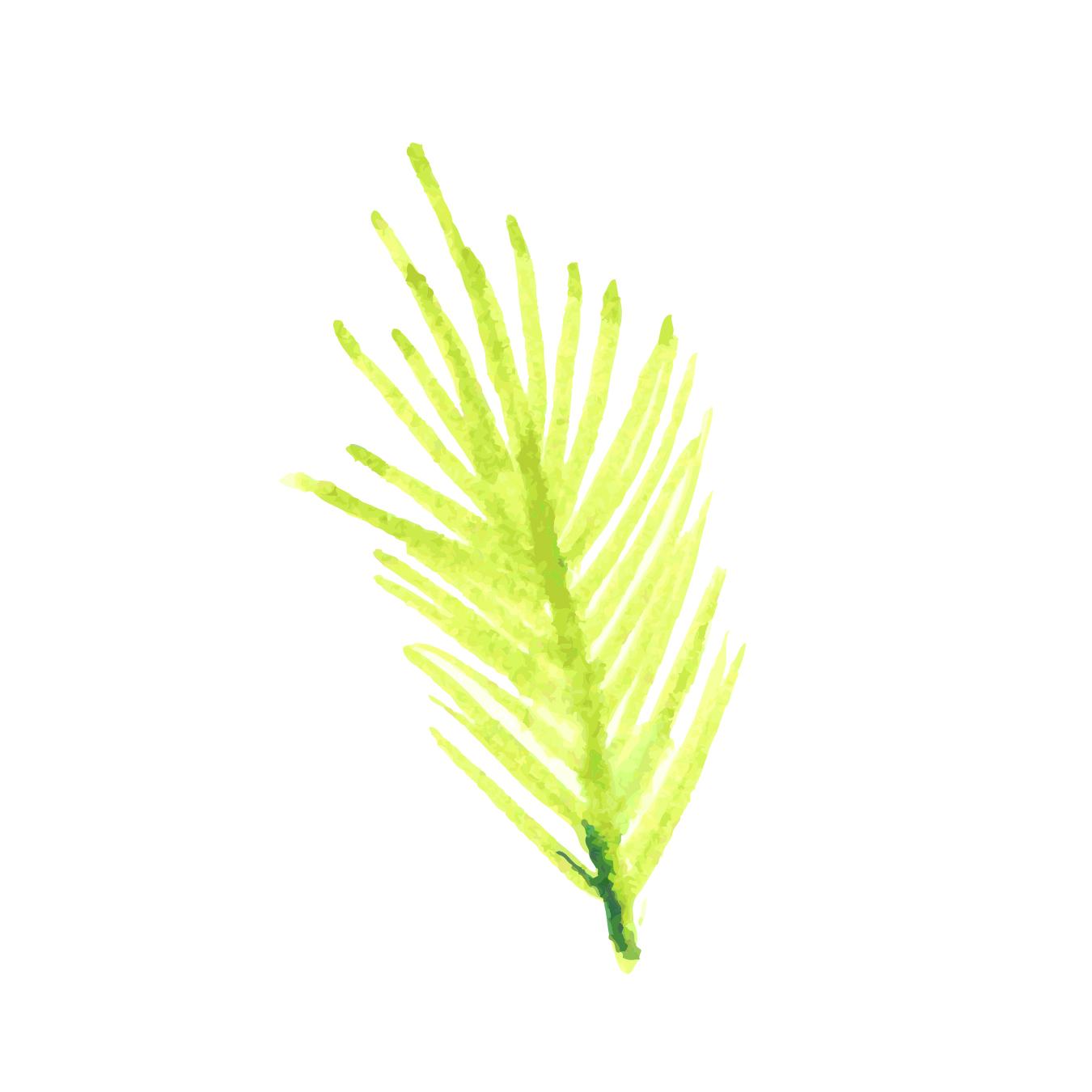 Tropicla Breeze clip art bundle example image 13