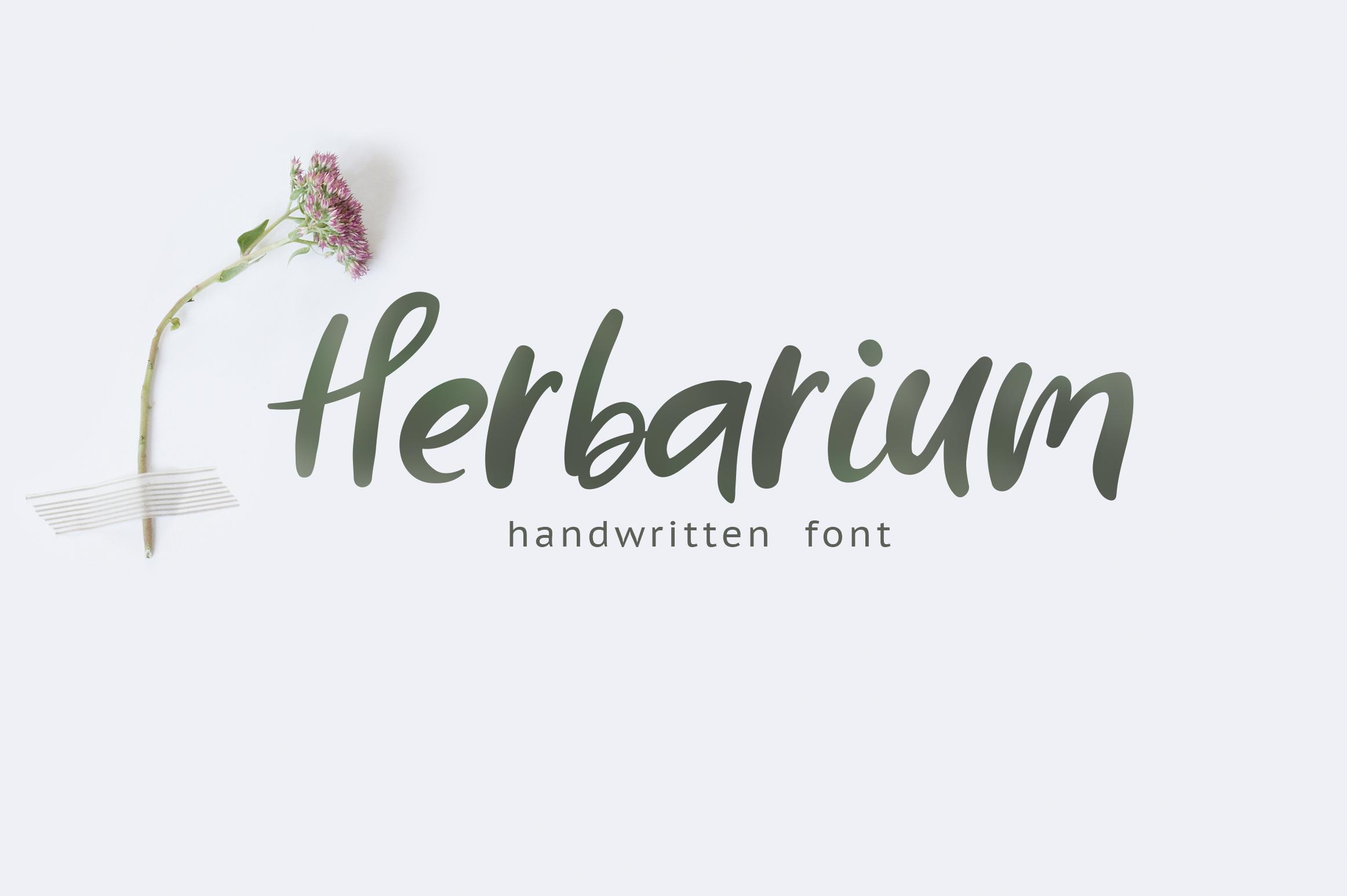 Herbarium font. New Language Update! example image 1