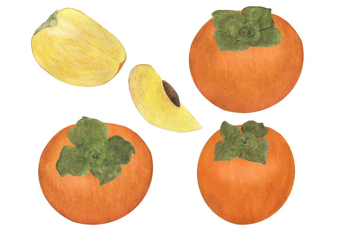 Set of persimmon watercolor illustrations. example image 12