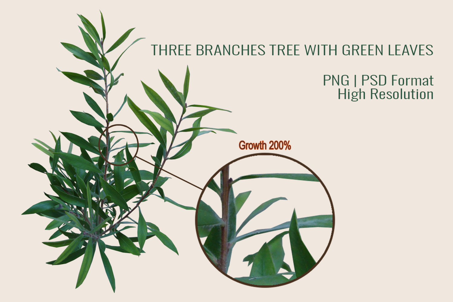 Three Branches Tree With Green Leaves PNG|PSD example image 7