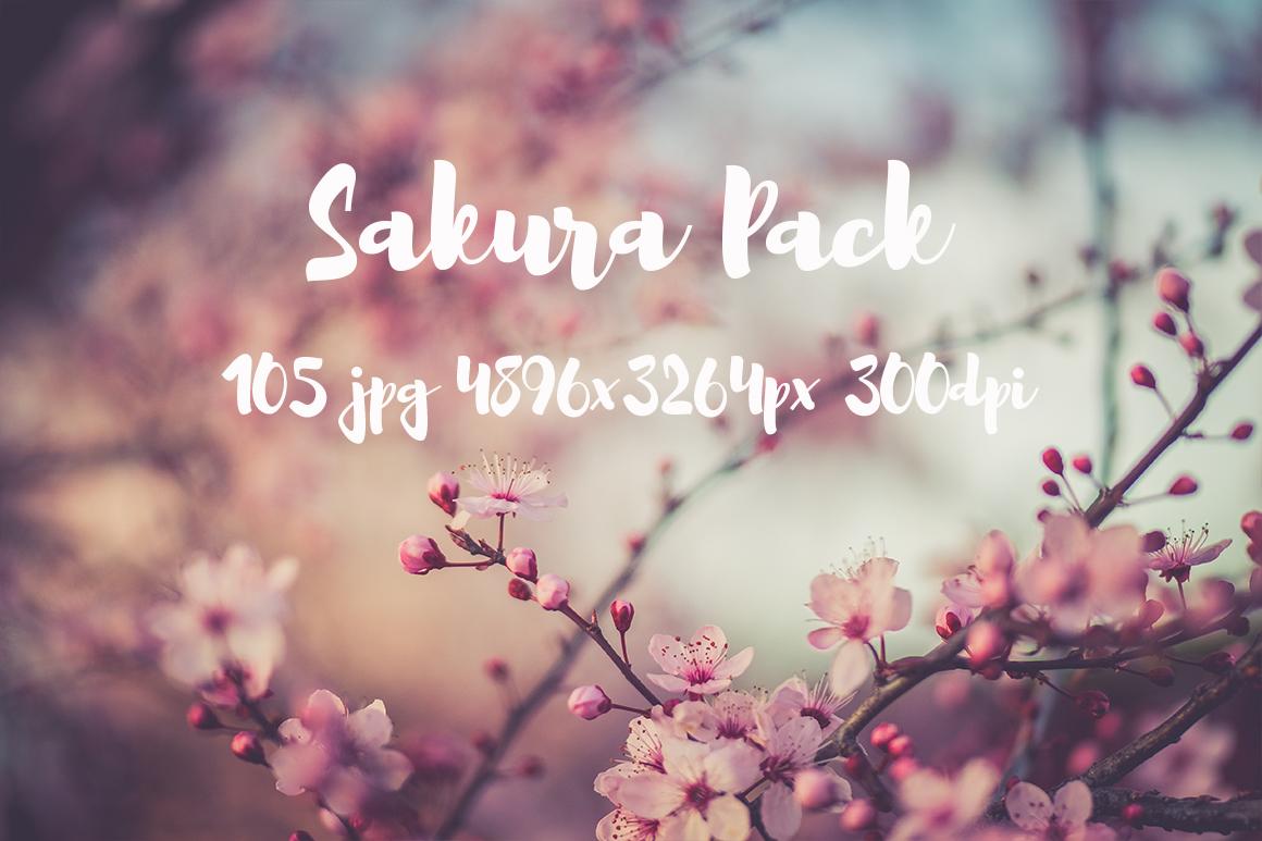 sakura photo pack example image 24