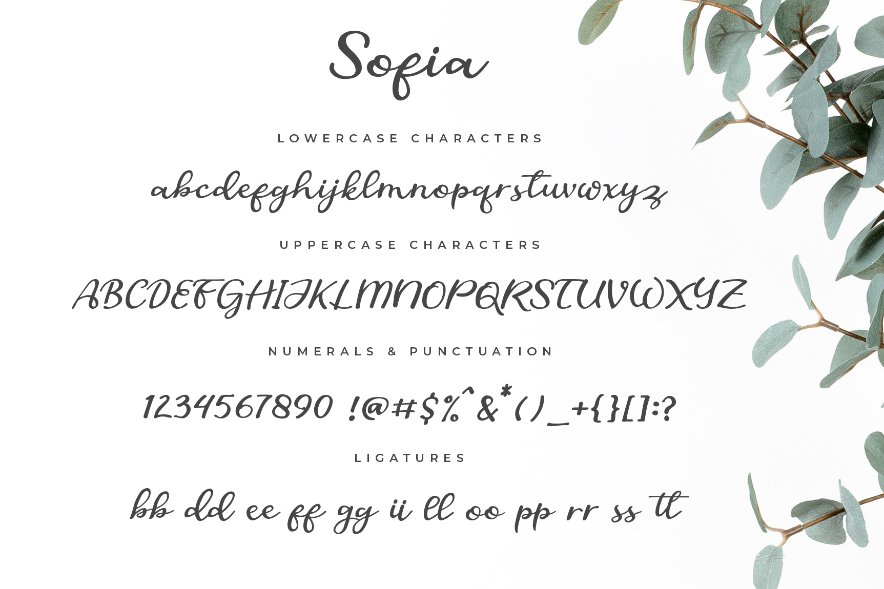 Sofia script example image 5